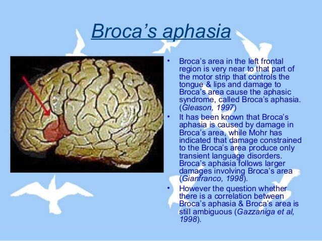 Broca's area: Alllows a person to speak smoothly and fluently. Located in the left frontal lobe. Broca's aphasta: condition resulting from damage to Broca's area, causing affected person to be unable to speek fluently. Broca = broken