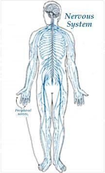 Neuropathy(nerve damage) the cause and its relief