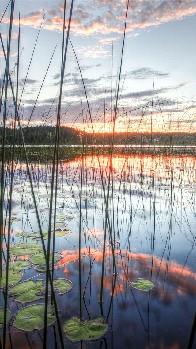 Reeds, lake, sky