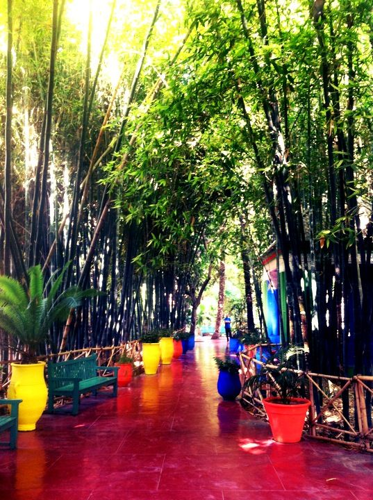Ysl garden Marrakesh