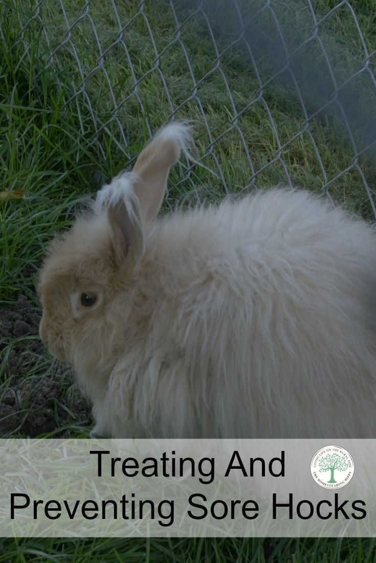 90 best raising rabbits images on pinterest raising rabbits