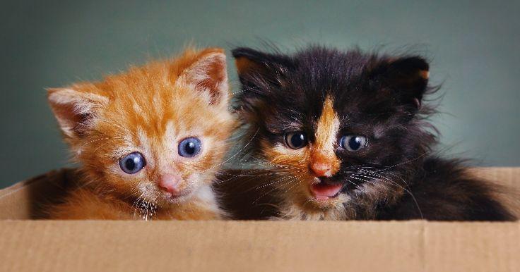 Des experts de l'université de Lund (Suède) ont annoncé un peu plus tôt ce mois-ci se mettre en quête de déchiffrer le miaulement félin. Ils se donnent 5 ans pour dire si oui ou non, les chats adaptent bel et bien leur «langage» à l'Homme.