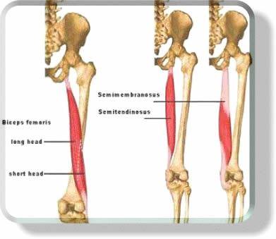 165 best Anatomy ~ Yoga ~ Foundation images on Pinterest | Physical ...