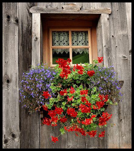 Window by ayrtonrezzafrdasilva, via Flickr