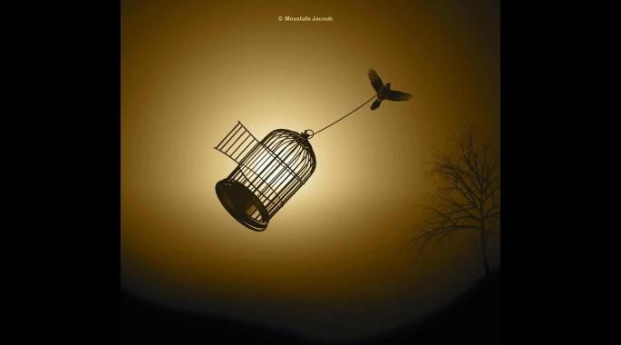 The Bird And The Golden Cage
