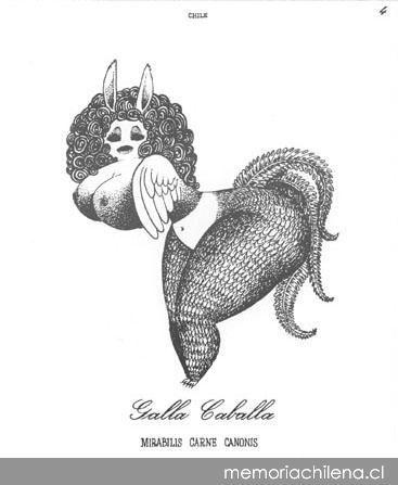 Galla caballa = Mirabilis carne canonis