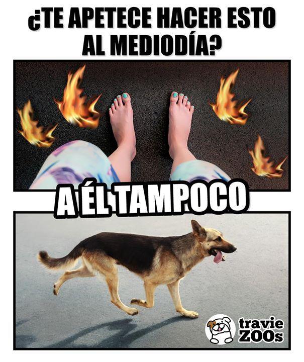 Procura Que Sus Paseos Sean Antes De Las 12 Del Dia O Despues De Las 5 De La Tarde Perros Frases Memes Perros Perros