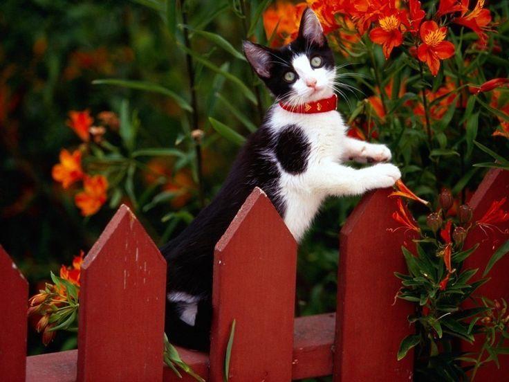 Профессиональные портреты кошек