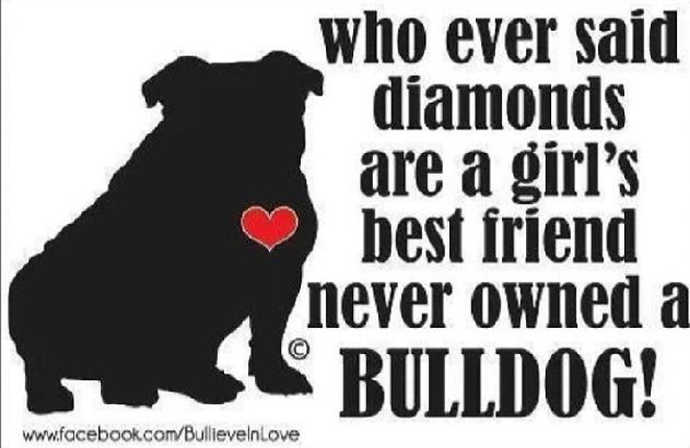 Who ever said diamonds are a girl's best friend never owned a bulldog!