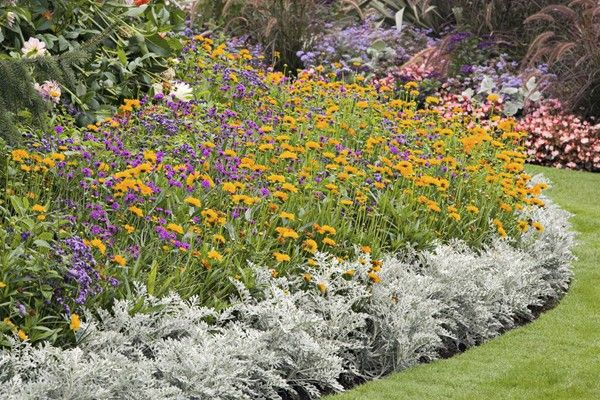 Beautiful Deer-Resistant Plants: The Prettiest Annuals, Perennials, Bulbs, and Shrubs that Deer Don't Eat)