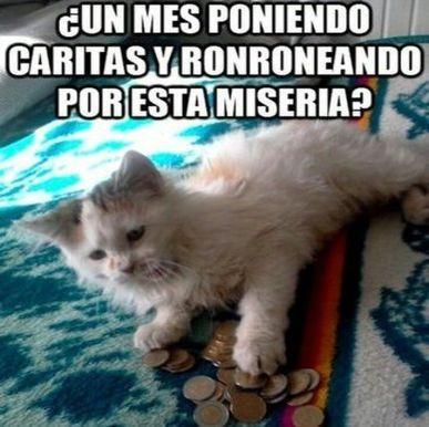 Sueldo bajo para un gato vaya miseria