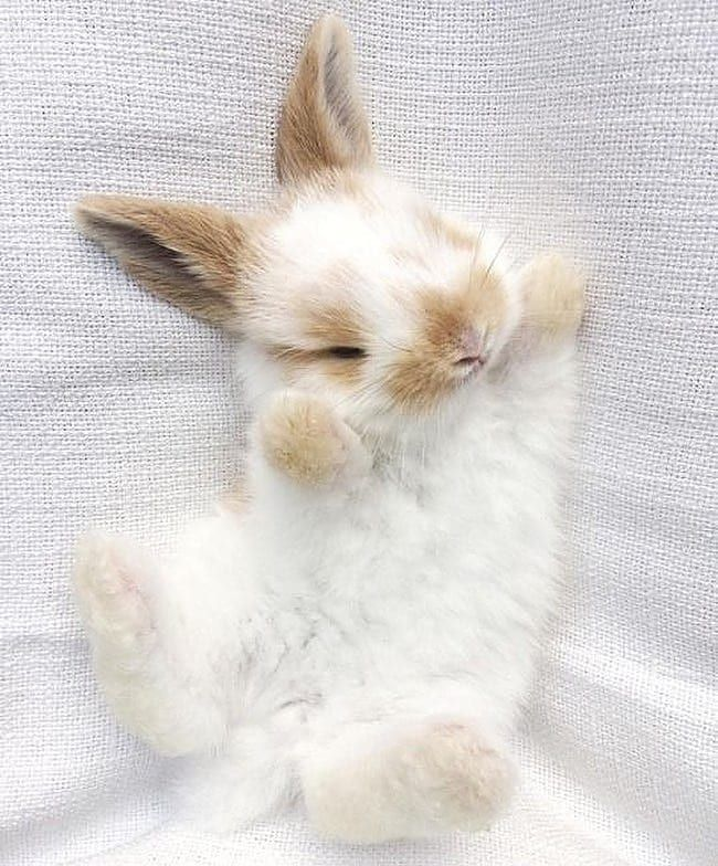 """Kaninchenliebhaber auf Instagram: """"Folge uns us@…"""
