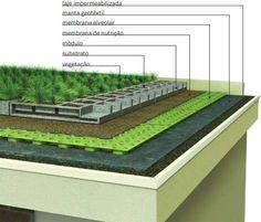 Reduzir ilhas de calor, promover isolamento acústico e até favorecer a biodiversidade são vantagens dos telhados verdes.
