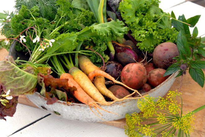 Selvdyrket, hjemmelaget og økologisk grønnsaksuppe. Jeg startet denne våren med ambisjoner langt større enn evnene innen grønnsaksdyrking. Det gikk som forventet.