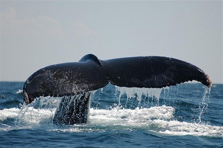 El poder y la belleza de las ballenas en #Nuqui #Choco. #FotoDelDia EnMiColombia.com