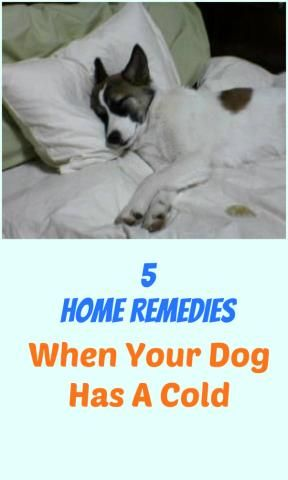 5 Home Remedies For When Your Dog Has A Cold...see more at PetsLady.com -The FUN site for Animal Lovers