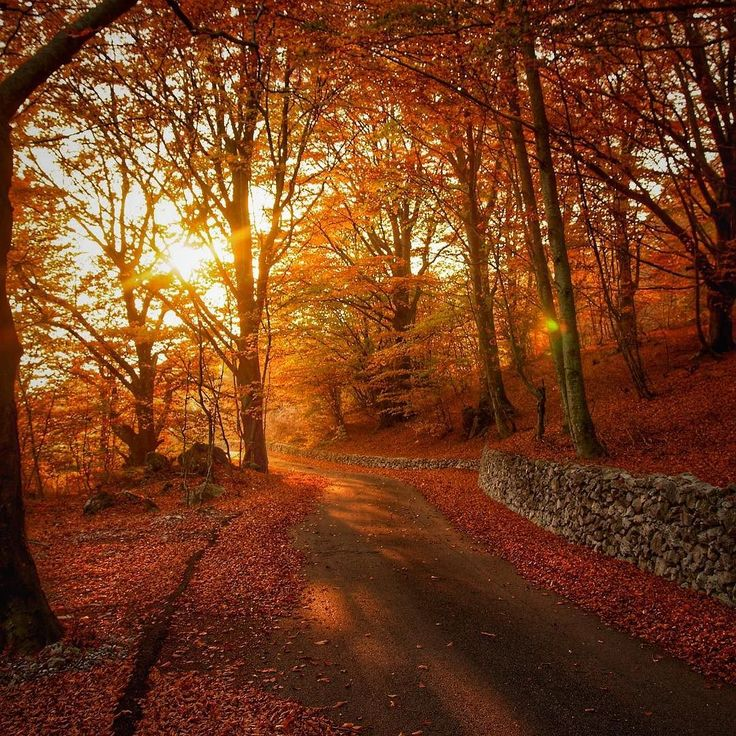 Autumn colours #tree #wood #autumn  #evening #light #sunset #silhouette  #sun #dream #summer #autumn  #holiday  #vacancy #viaggiare #sunset  #nikon  #nikond90 #nikonitalia #twitter