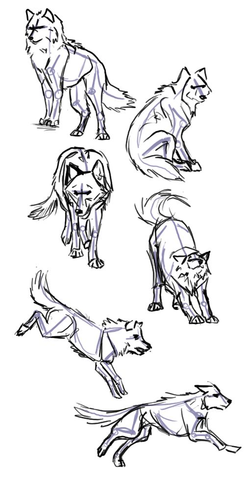 wolf poses drawing anime reference drawings deviantart draw wolves animal voodoo pose dog animals cool sketch references sketches base xn