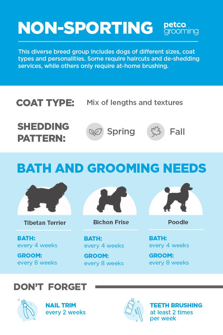 Whether You Diy Groom Or See A Professional Groomer Keeping Your