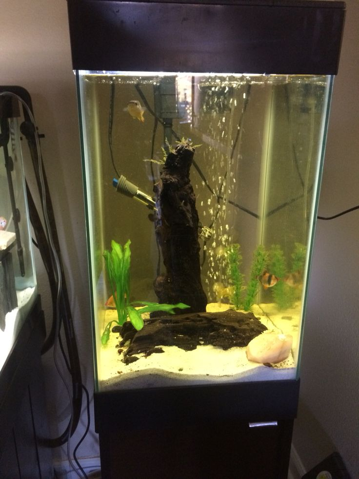 15 gallon column aquarium fish stuff pinterest aquariums