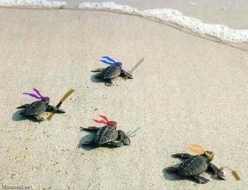 La prueba de que las tortugas ninja existen