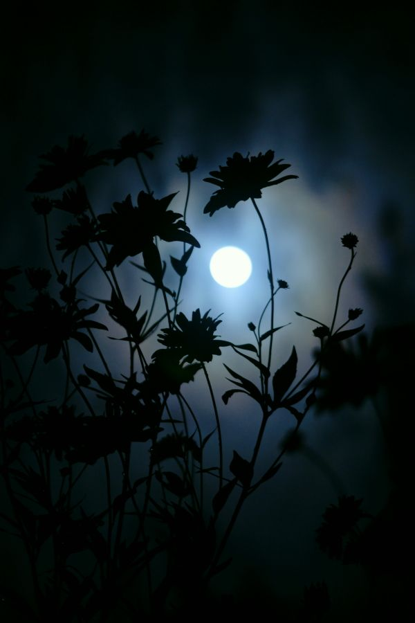 moon by hiroyuki saito on Fotoblur | Nature Photography: