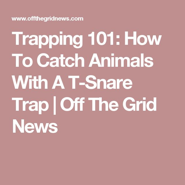 Trapping 101: How To Catch Animals With A T-Snare Trap | Off The Grid News