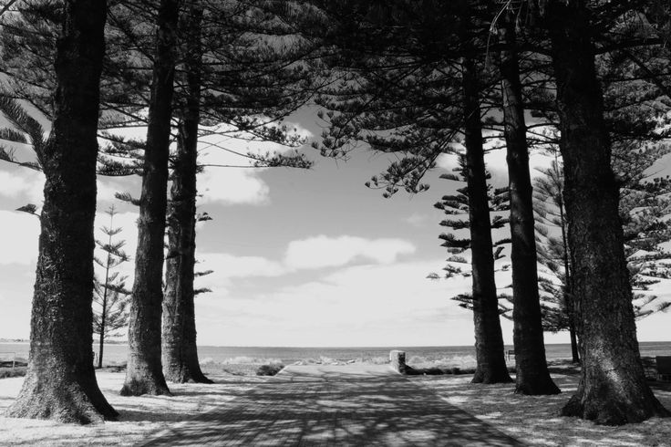 """Nature photography """"Path to the beach"""", black and white photography, beach photography, ocean photography, trees, path and beach, home decor by TKIPhotography on Etsy"""