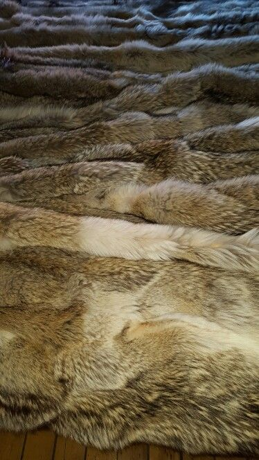 LK. There's room for quite a few on top and under all of these Coyotes. It's called Fur topography or endless joy. LK