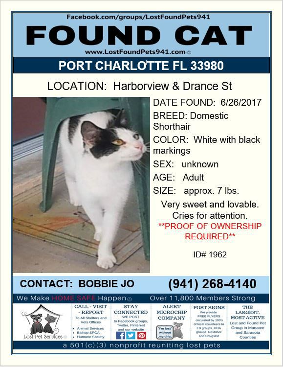 Do you know me? #Found #cat #missing #pets #PortCharlotte 33980 #LostFoundPets941 #LostPetServices