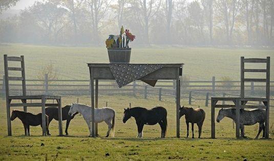 Jens Braun tafel_paardenstal_innovatie met een glimlach