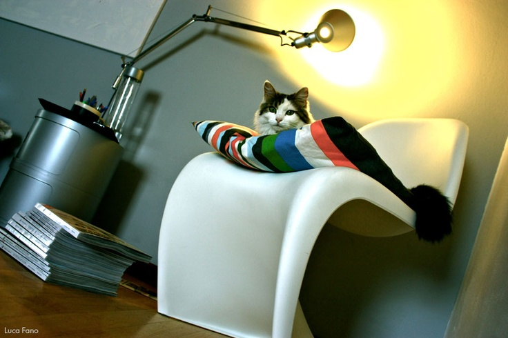 Panton Chair - not only for cats
