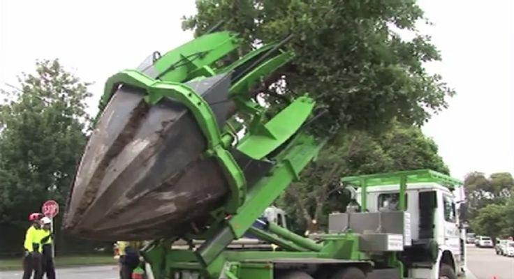 ¿Para qué cortar árboles si puedes reacomodarlos?