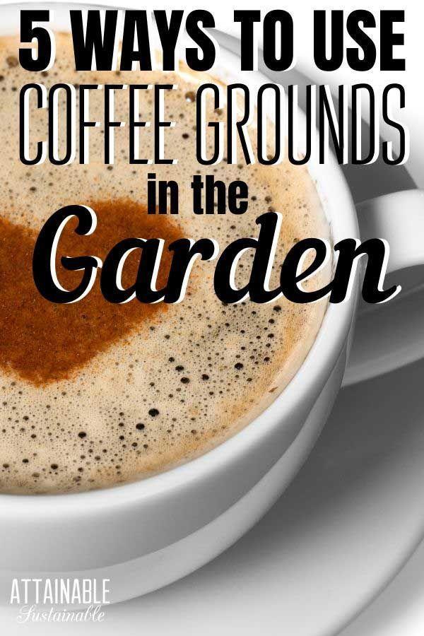 4462da7f2081e2357bdbd63d6b050f42 - Coffee Grounds Good For Vegetable Gardens