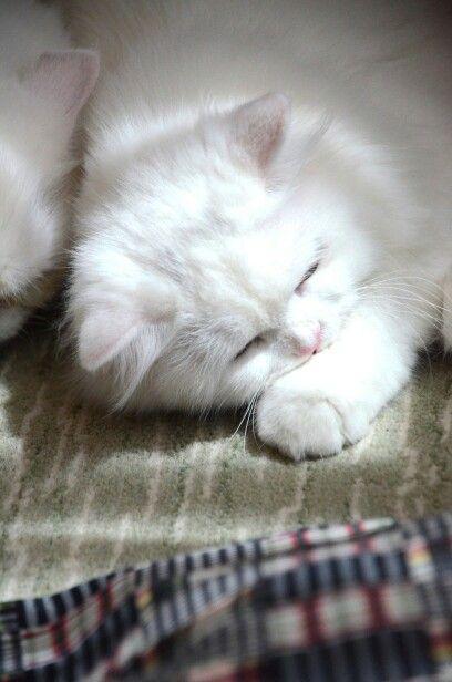 Peace sleep cat