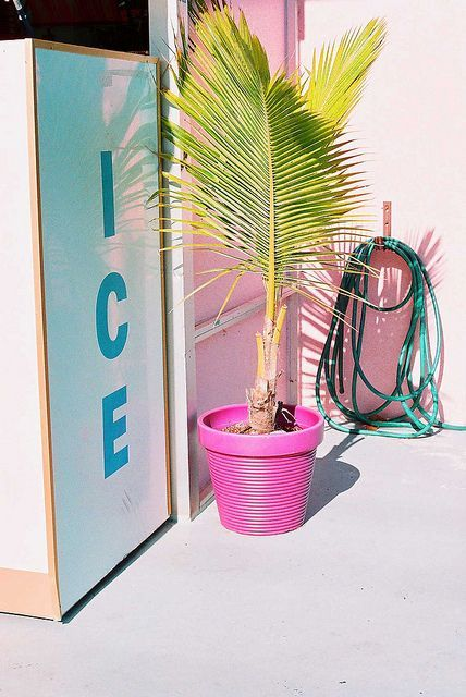 ice . pink Pastel Palm Repinned By: Live Wild Be Free www.livewildbefree.com Cruelty Free Lifestyle & Beauty Blog. Twitter & Instagram @livewild_befree Facebook http://facebook.com/livewildbefree