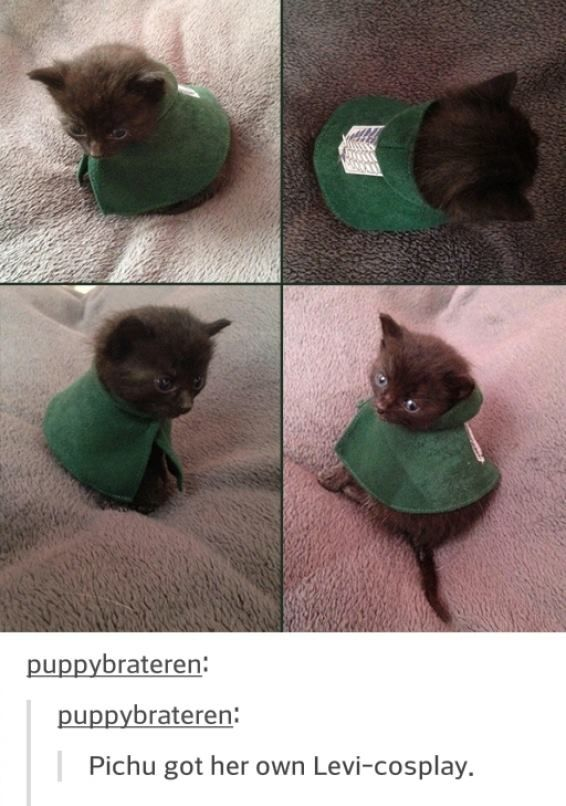Kitten with Levi cosplay. Also, the cat is named after a Pokémon, and that has got to count for something, too.