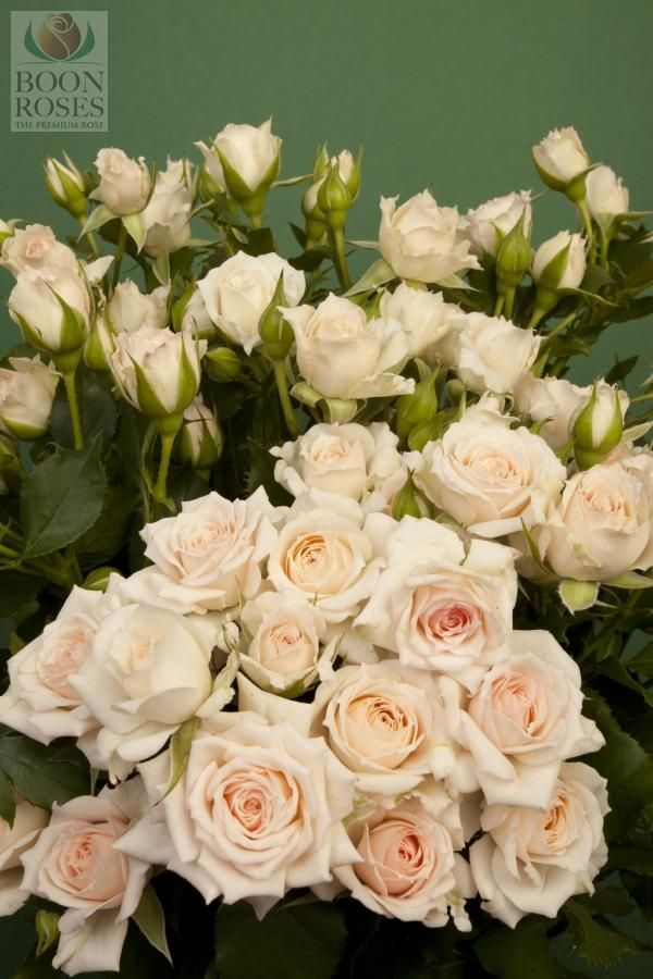 Wedding Bouquets Variety : Best images about roses on rose varieties