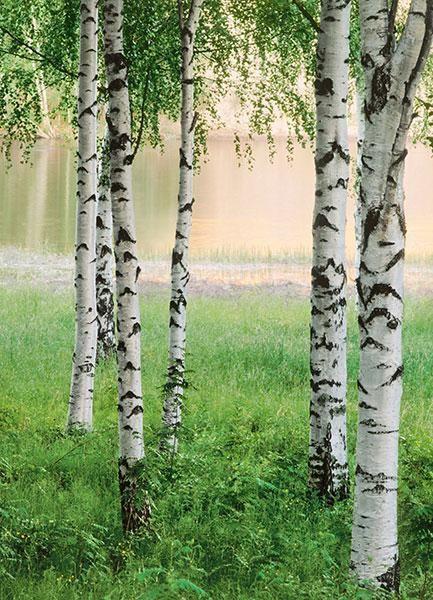 Fototapet 00381 Nordic Forest