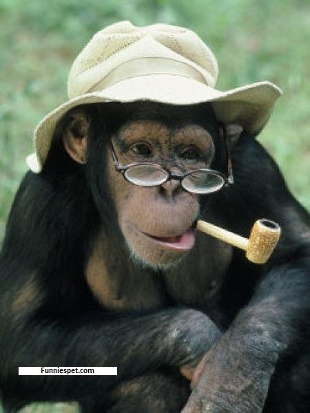 funny smoking monkey
