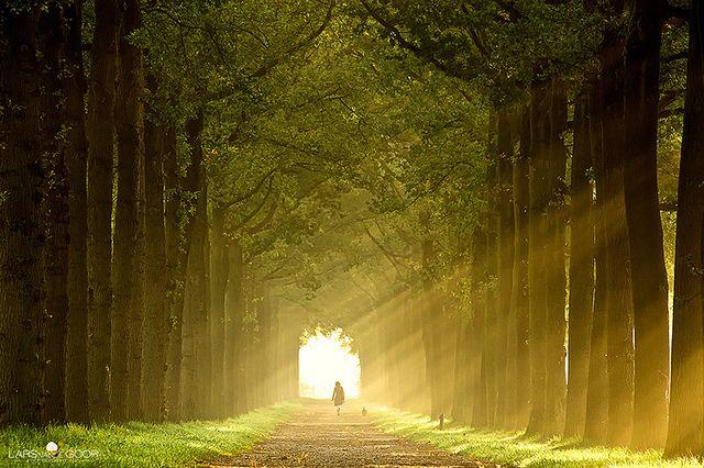 zonnestraaltjes by larsvandegoor.com, via Flickr: Beautiful Mornings, Walks, Sun Ray, Vans, Trav'Lin Lights, Driveways, Sunray, Photo, Roads