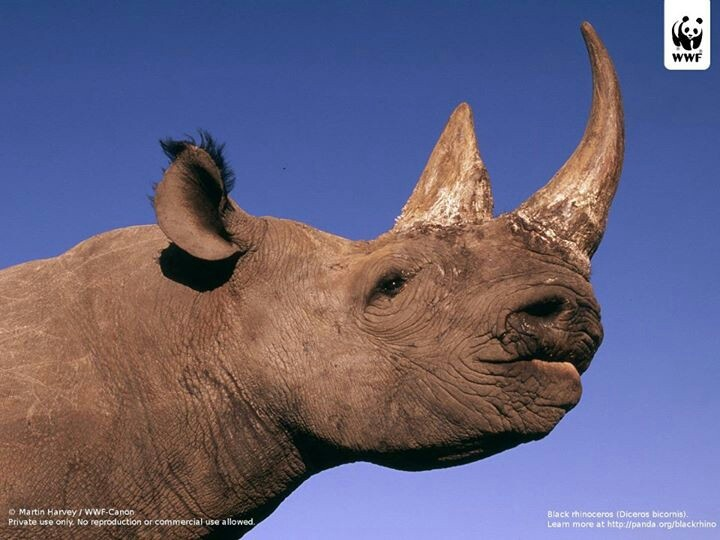 4880 black rhinos left