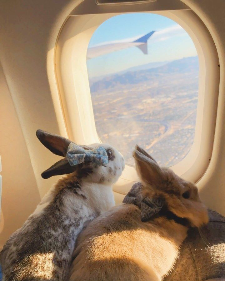 """Miffy 