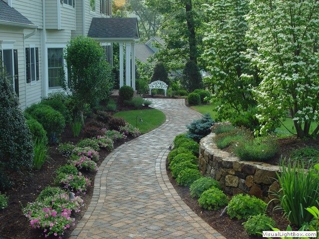 Paver walkway line with shrubs such as globe caragana for Walkway landscaping