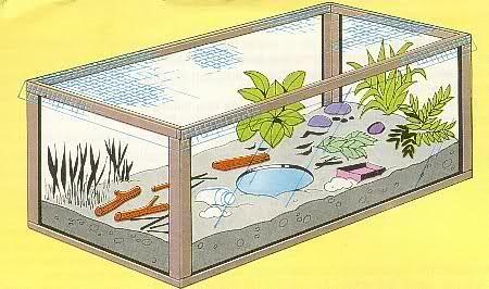 Terrarium experiment
