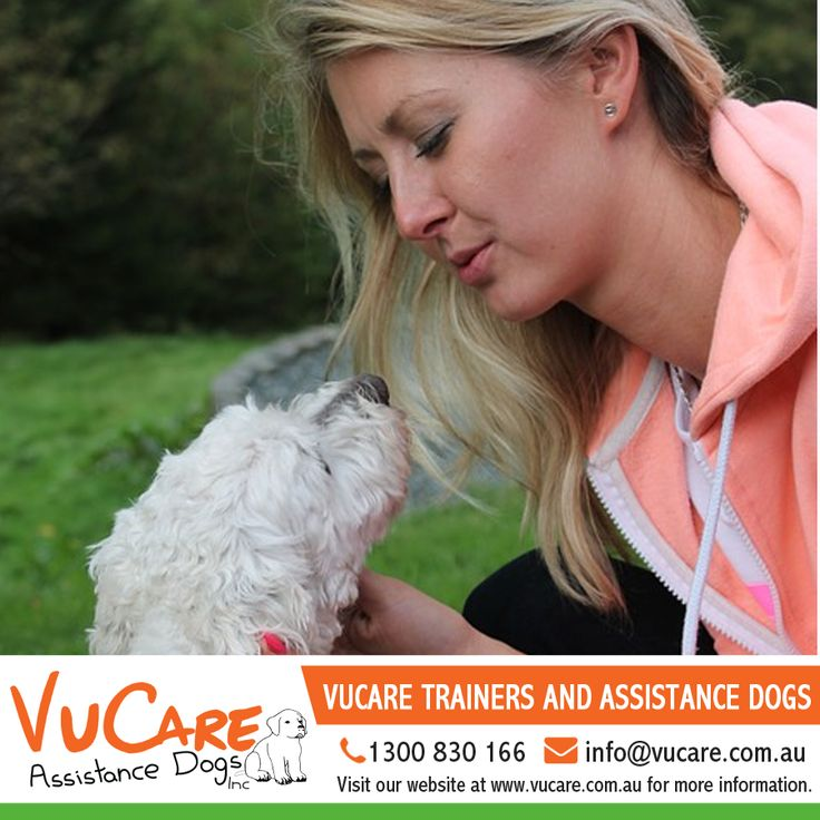 VuCare in conjunction with our registered trainers preselect our dogs from a small group of trusted breeders so as to assure temperament and avoid potential genetic issues.   #Dogs #Pets #VuCare #DogsAssistance #Dog #DogOnDuty #DogCare #ServiceDogs #AssistanceDogs #DogTraining #AssistanceDogProgram #trainer #dogtrainer