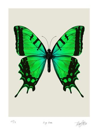 Free Butterfly Images for Printing | space science wildlife technical book lp covers buy prints contact