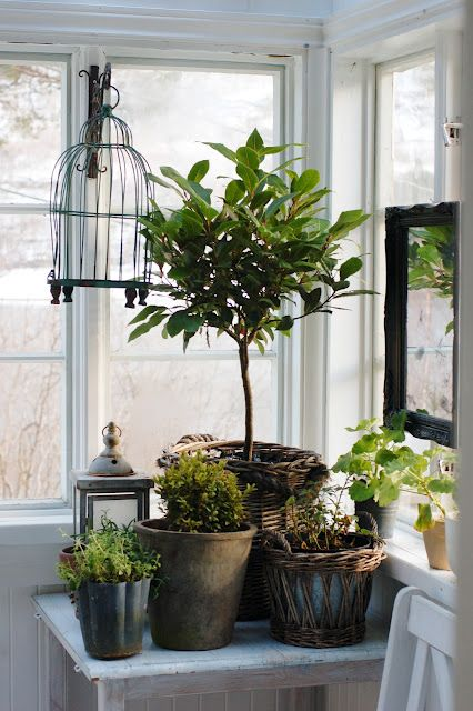 Grouping of plants in a Norwegian sun porch by Kristin