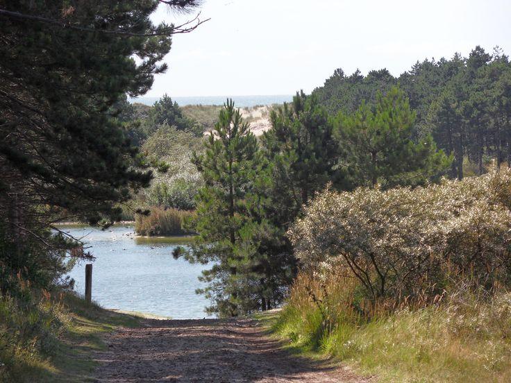 Fantastische plek om te hardlopen, de gele paaltjes route vanaf Westenschouwen  Het bos van Burgh-Haamste   Zeeland