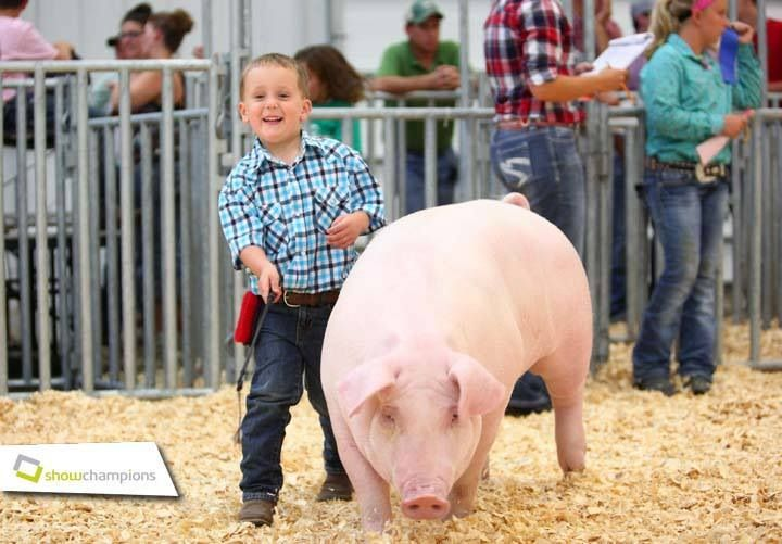 The passion of showing livestock begins at a young age! #stockshowlife